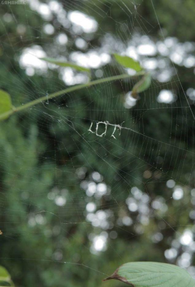 araignees-envoient-sms