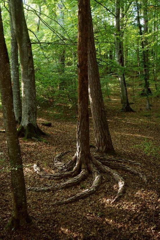 arbre avec des racines en spirale. Black Bedroom Furniture Sets. Home Design Ideas
