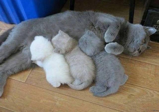 chat-plus-encre