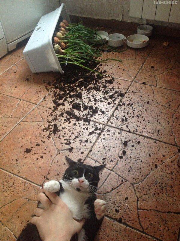 chat-tue-pas-stp
