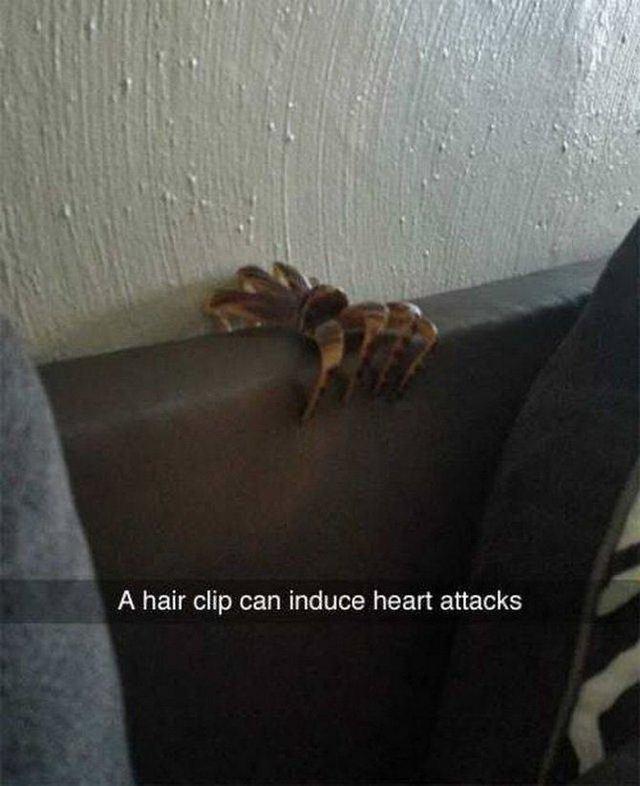 barrette-cheveux-araignee