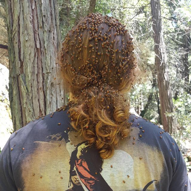 attaques-coccinelles-sur-les-cheveux