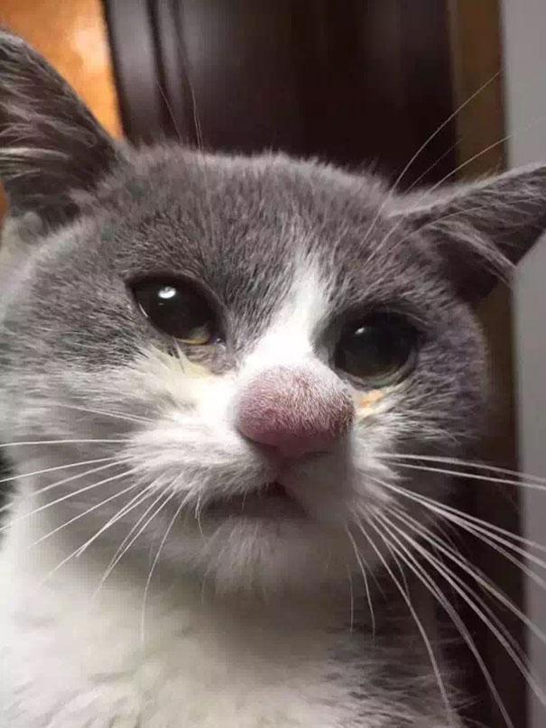 chat-pique-nez-abeille