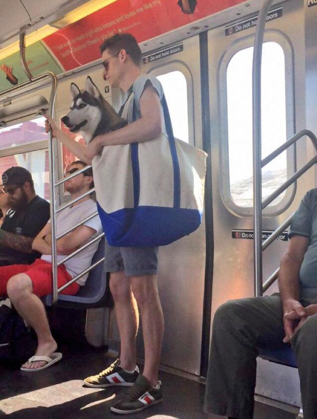 chien-autorise-metro-rentre-sac