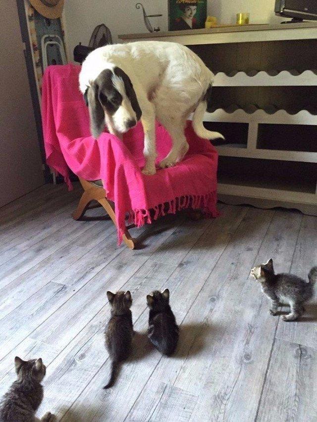 chien-peur-chatons