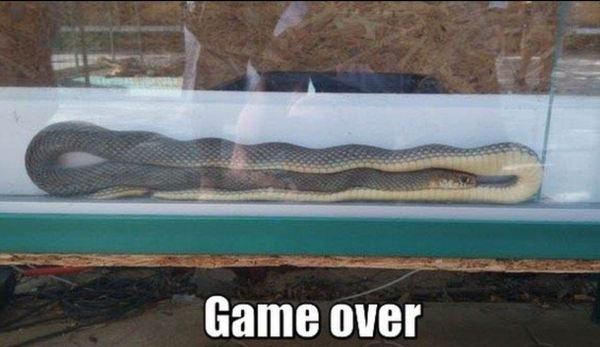 snake-irl-game-over