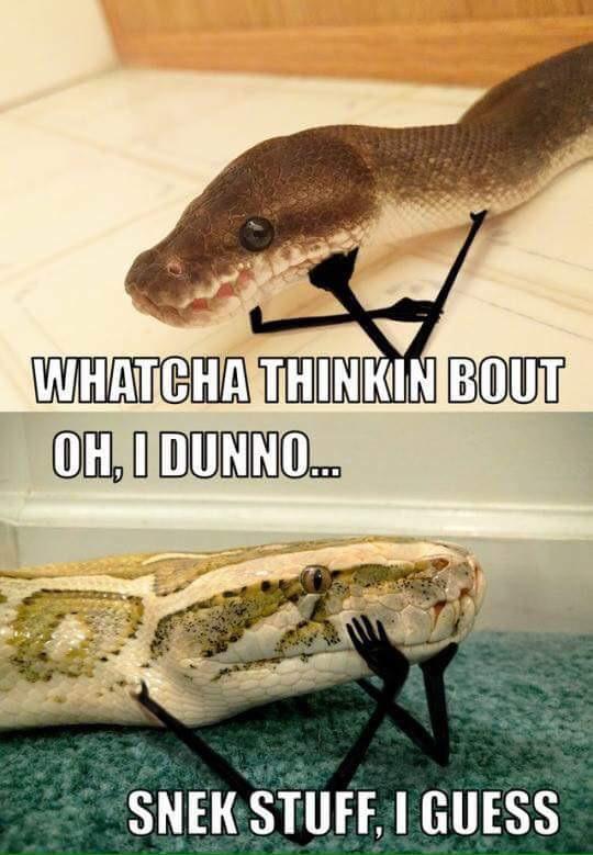 snake-stuff