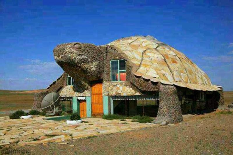 Une maison en forme de tortue for Forme de maison