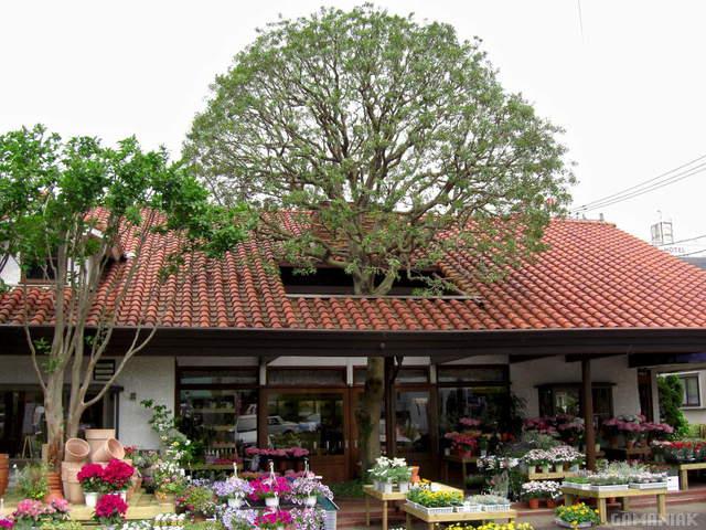 arbre-travers-toit