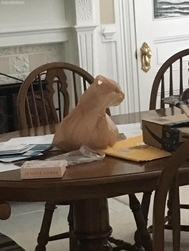 sac-plastique-tete-chat