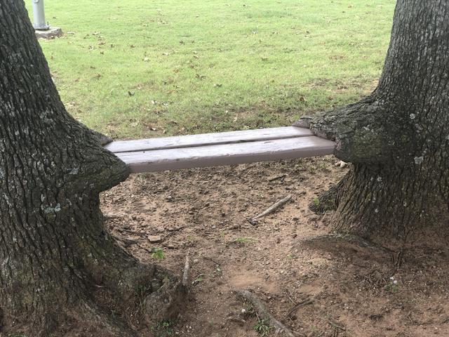 banc-2-arbres