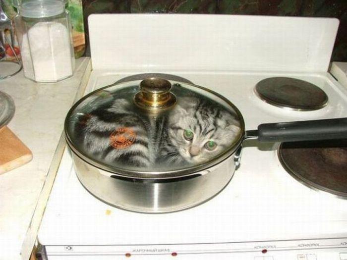 vrac-48-chat-casserole