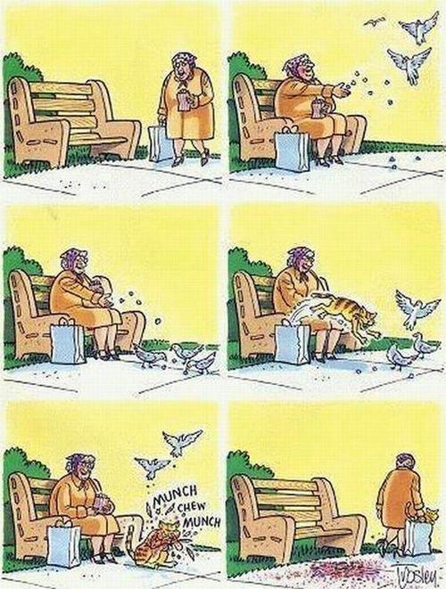 vrac-48-mamie-pigeon-chat