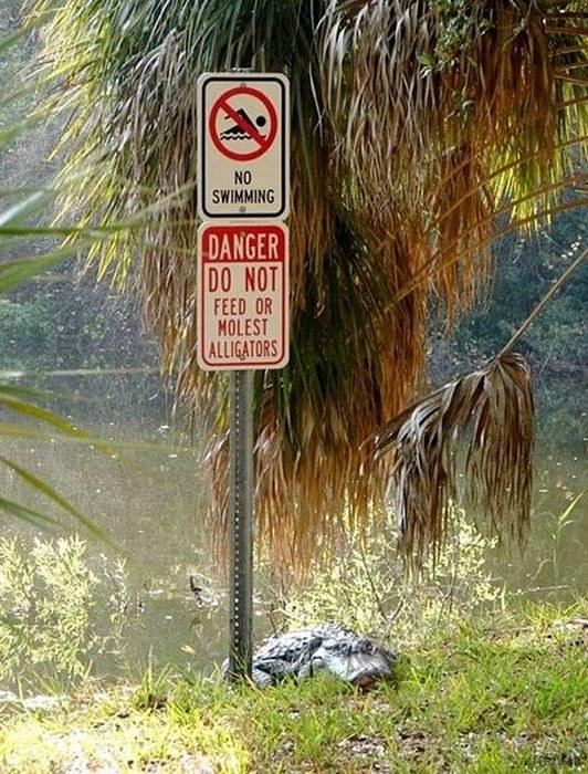 ne-frappez-pas-alligators