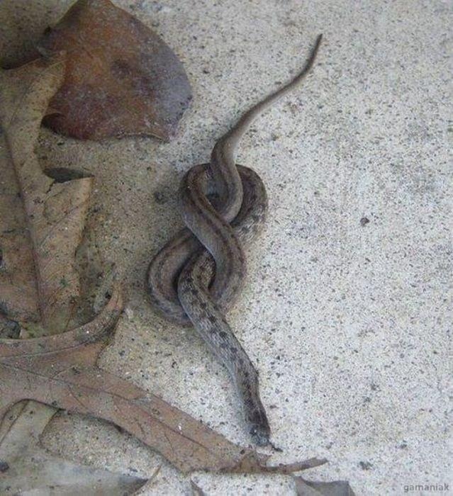 suicide-serpents