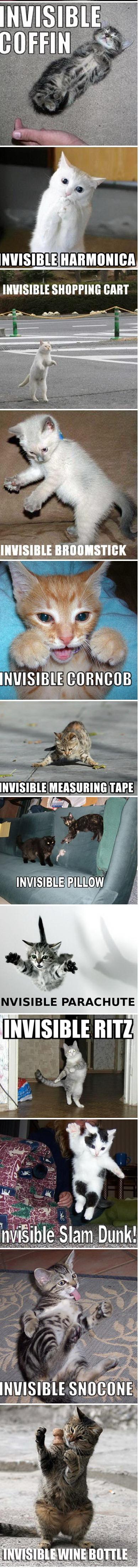 chats-invisibilite