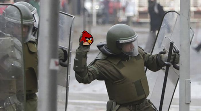 crs-angry-birds