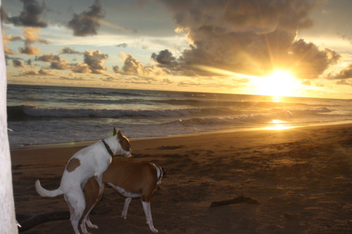 beau-coucher-soleil-entre-amoureux