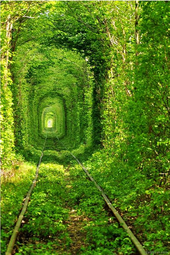 chemin-train-tout-vert