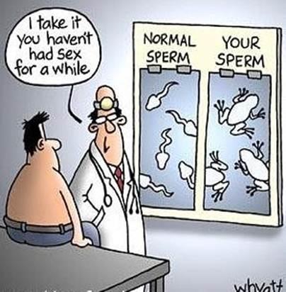 sperme-evolue