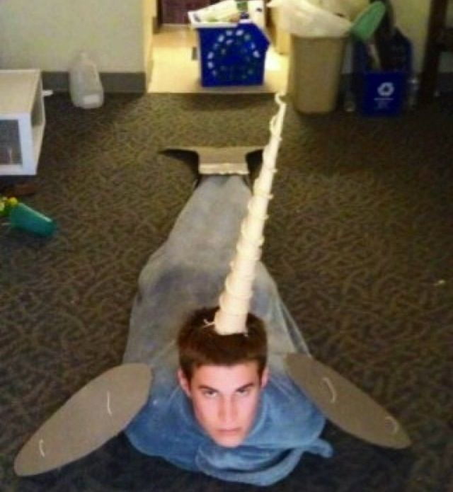 im-a-narwhal