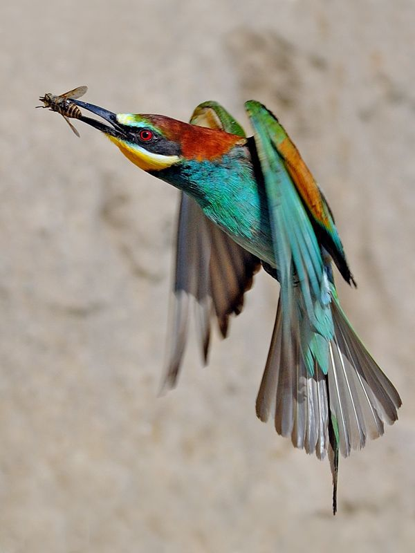 oiseau-qui-attrape-insecte
