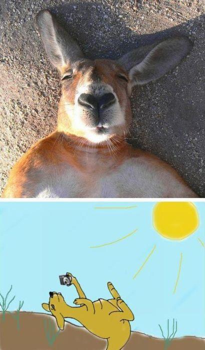 kangourou-prend-photo