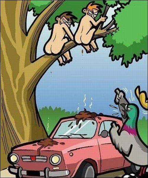 humains-qui-font-caca-sur-voiture-pigeons