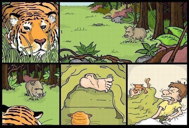 tigre-chasse