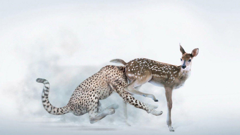 guepard-biche
