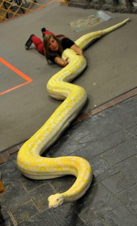 non-copain-serpent-ten-va-pas