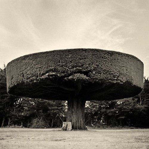arbre-enorme
