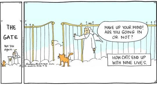 chat-aux-portes-paradis