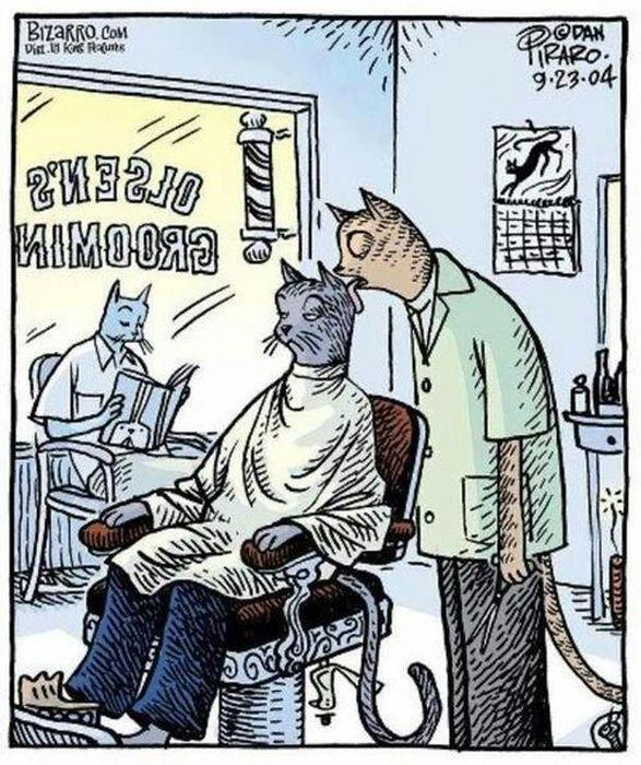 coiffeur-pour-chats