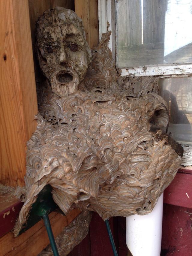 nid-frelons-visage-humain
