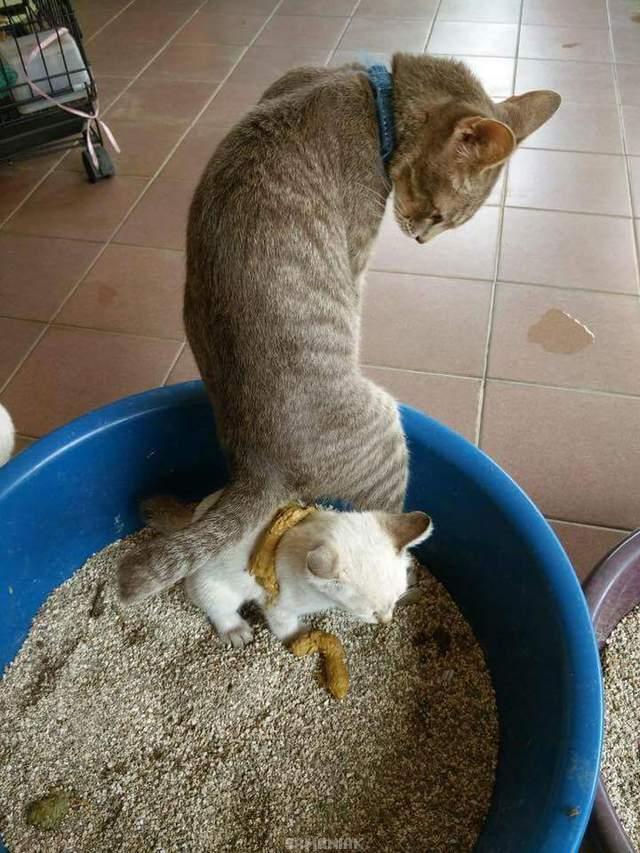chat-caca-autre