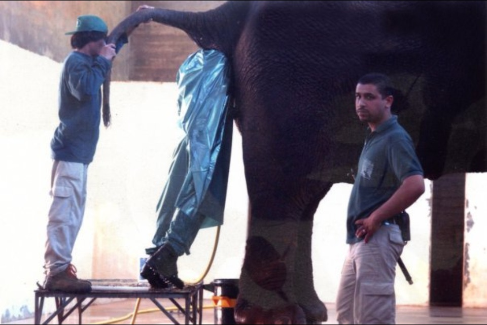 homme-cul-elephant