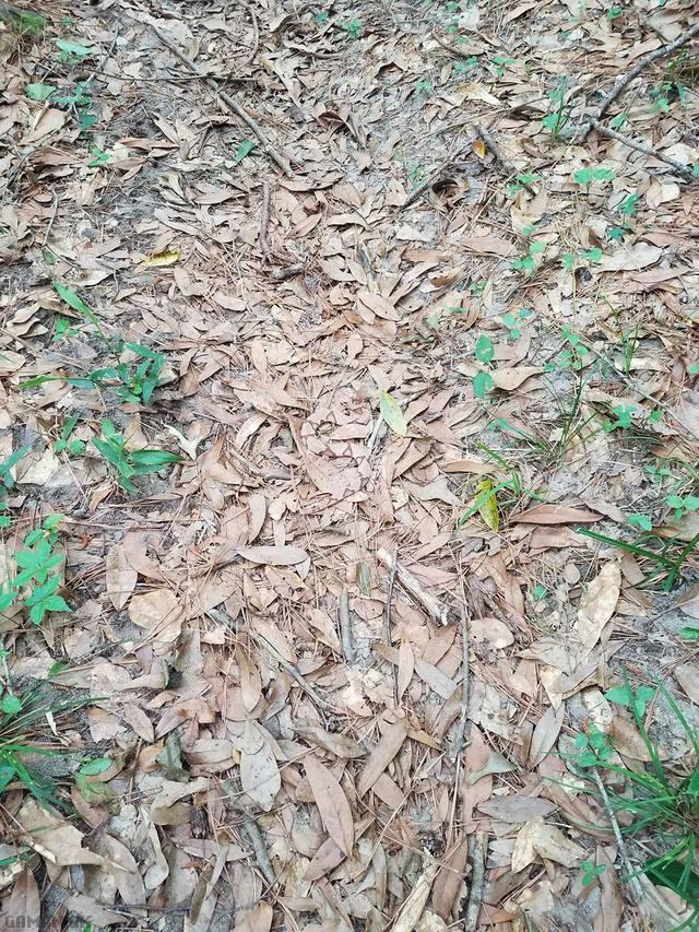 Image Trouvez le serpent