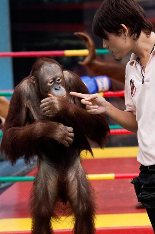 Image Un singe pointé du doigt
