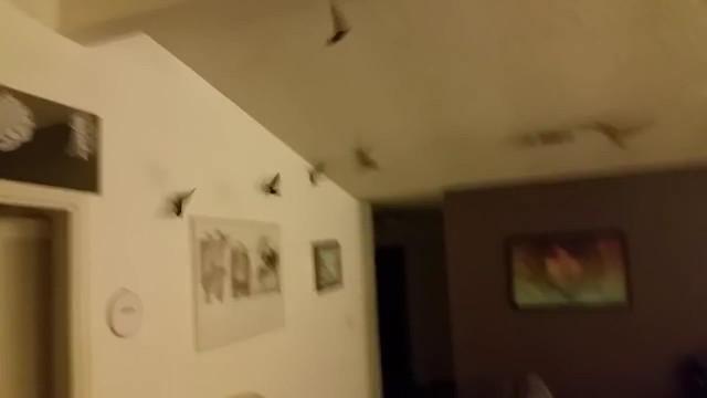 une invasion d 39 oiseaux dans leur maison. Black Bedroom Furniture Sets. Home Design Ideas