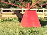 Un cheval heureux saute un peu trop