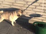 Un chien boit l'ombre d'un filet d'eau
