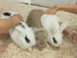 Des lapins aimants