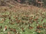 Des milliers de papillons