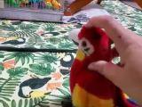 Un perroquet jaloux d'une peluche